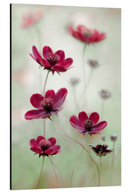 Mandy Disher - Cosmos sway