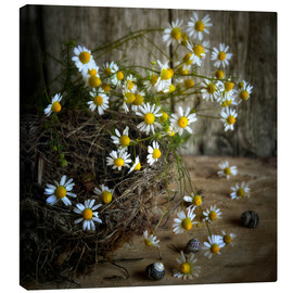 Canvas print   chamomile  - Claudia Moeckel