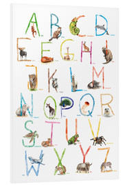 Foam board print  Animal ABC - Nadine Conrad