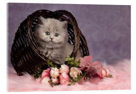 Acrylic print  Cute cat kid in the basket - purple dreams - Janina Bürger