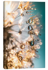 Canvas  Dandelion summer happiness in turquoise gold - Julia Delgado