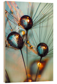 Wood print  Dandelion umbrella with large dew drops - Julia Delgado