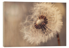 Wood print  Dandelion naturalness - Julia Delgado