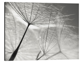 Aluminium print  Dandelion Umbrella in black and white - Julia Delgado