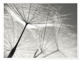 Premium poster  Dandelion Umbrella in black and white - Julia Delgado