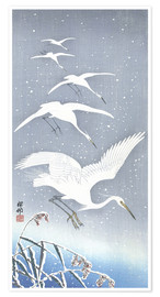 Premium poster Heron in the snow