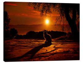 Canvas print  Cat in the sunset - Elena Dudina