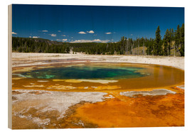 Wood print  Beauty Pool, Yellowstone National Park - Circumnavigation