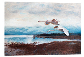 Acrylic print  swans in flight - Bruno Andreas Liljefors
