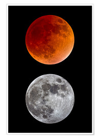 Premium poster blood moon-super moon-full moon