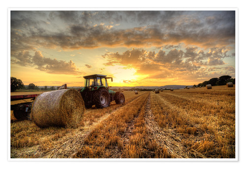 Premium poster Harvested Cornfield Sunset