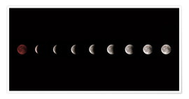 Poster  Moon phases 2018 - WildlifePhotography