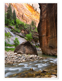 Premium poster The Narrows, Zion National Park, Utah, USA