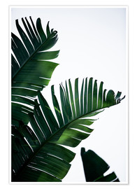 Premium poster Palm Leaves 16