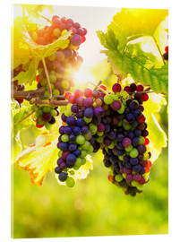 Acrylic print  Bunch of black grapes on the vine - Elena Schweitzer