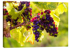 Canvas print  Black grapes - Elena Schweitzer