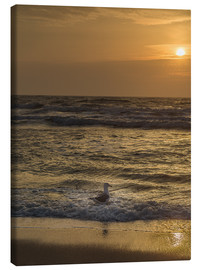 Canvas  Seagull in the sunset - Heiko Mundel