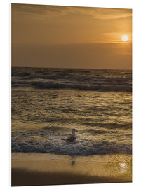 Foam board print  Seagull in the sunset - Heiko Mundel