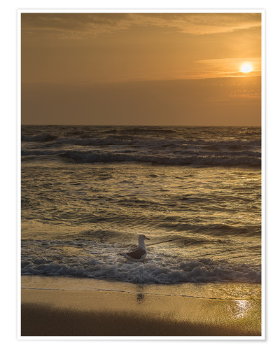 Premium poster Seagull in the sunset