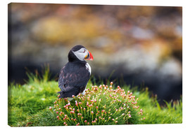 Canvas print  Puffins on Lunga Island - Reemt Peters-Hein