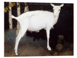 Foam board print  Young white goat - Jan Mankes