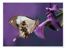 Premium poster Pretty butterfly on pink flower