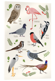 Acrylic glass  Bird Species - English - Kidz Collection