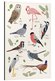 Kidz Collection - Bird Species - English