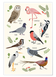 Poster Bird species (German)