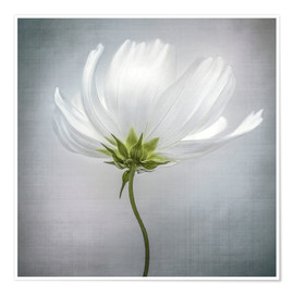 Premium poster  Cosmos - Mandy Disher