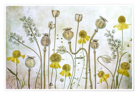 Mandy Disher - Poppy and Helenium