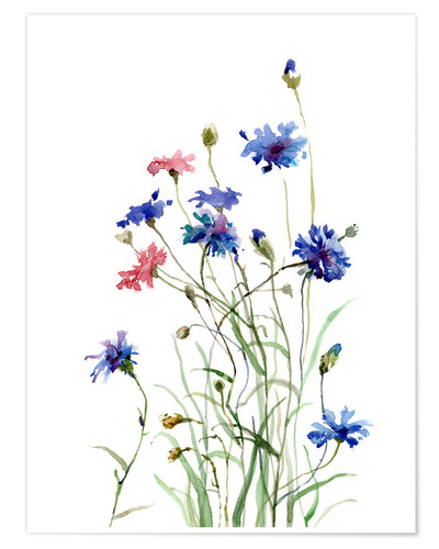 Premium poster Cornflowers watercolor