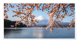Premium poster Mt. Fuji with cherry tree panoramic, Japan