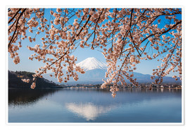 Premium poster Mt. Fuji and cherry tree, Japan