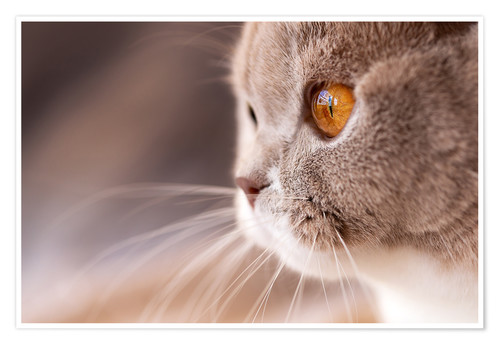 Premium poster Look into my eyes - cat's eye
