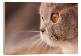 Wood print  Look into my eyes - cat's eye - Janina Bürger