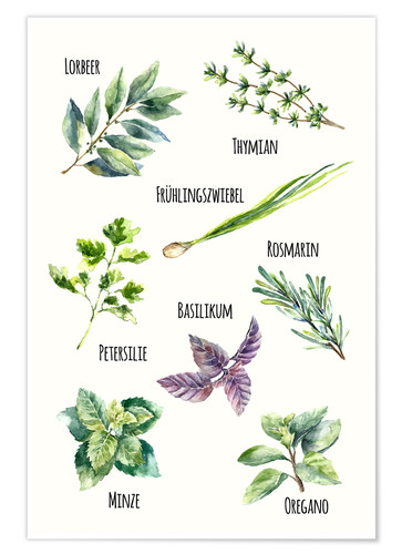 Poster Herbs (German)