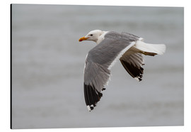 Aluminium print  Gull in flight - Bjoern Alicke