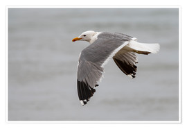 Premium poster Gull in flight