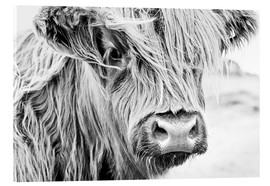 Acrylic print  Highland cattle - Art Couture