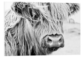 Foam board print  Highland cattle - Art Couture