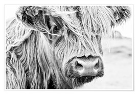 Poster  Highland cattle - gentle look - Art Couture