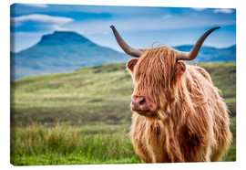 Canvas  Highland cattle, Scotland - Art Couture
