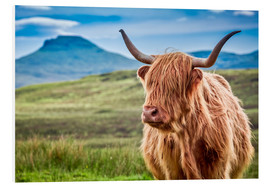 Forex  Highland cattle in Scotland - Art Couture
