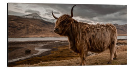 Aluminium print  Highland cattle - Art Couture