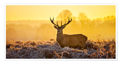 Premium poster Deer in the autumn forest