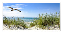 Premium poster Seagull flight over sand dunes, Baltic Sea
