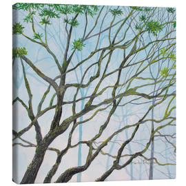 Canvas print  MOSSY TREE VIEW - Herb Dickinson