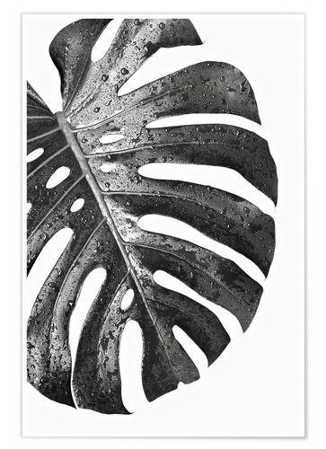 Premium poster Black monstera 01
