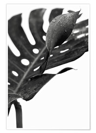 Premium poster Black monstera 02